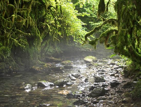 La Petite Amazonie des Pyrénées