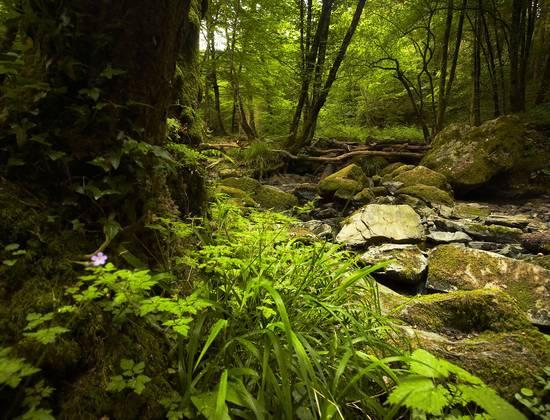 Massif Forestier De Mervent-Vou