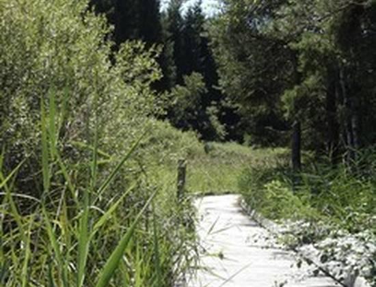 La Maisondesgrenouillettes 224 Challes La Montagne 26659