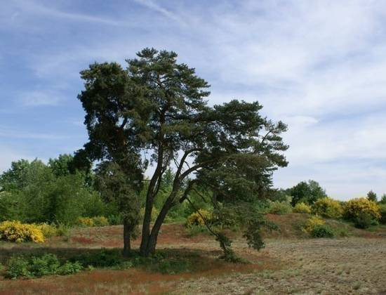 Site naturel des Charmes